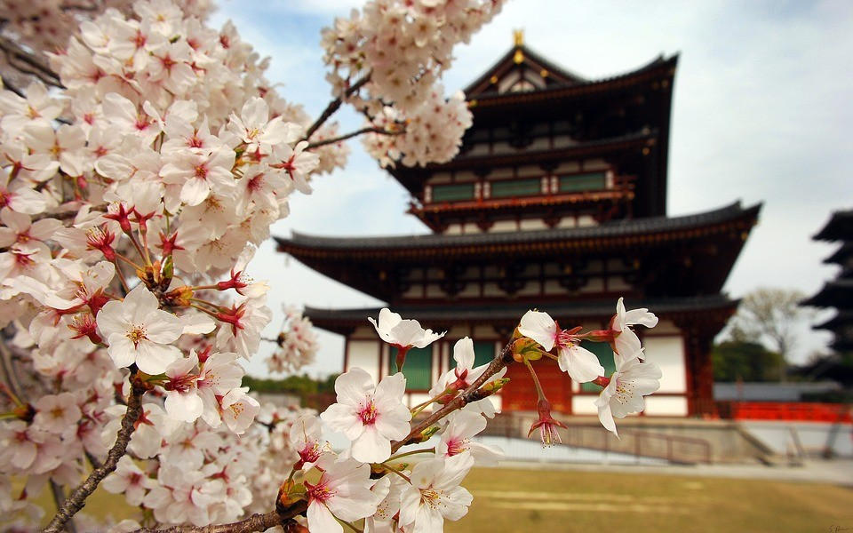 giappone tempio con ciliegio