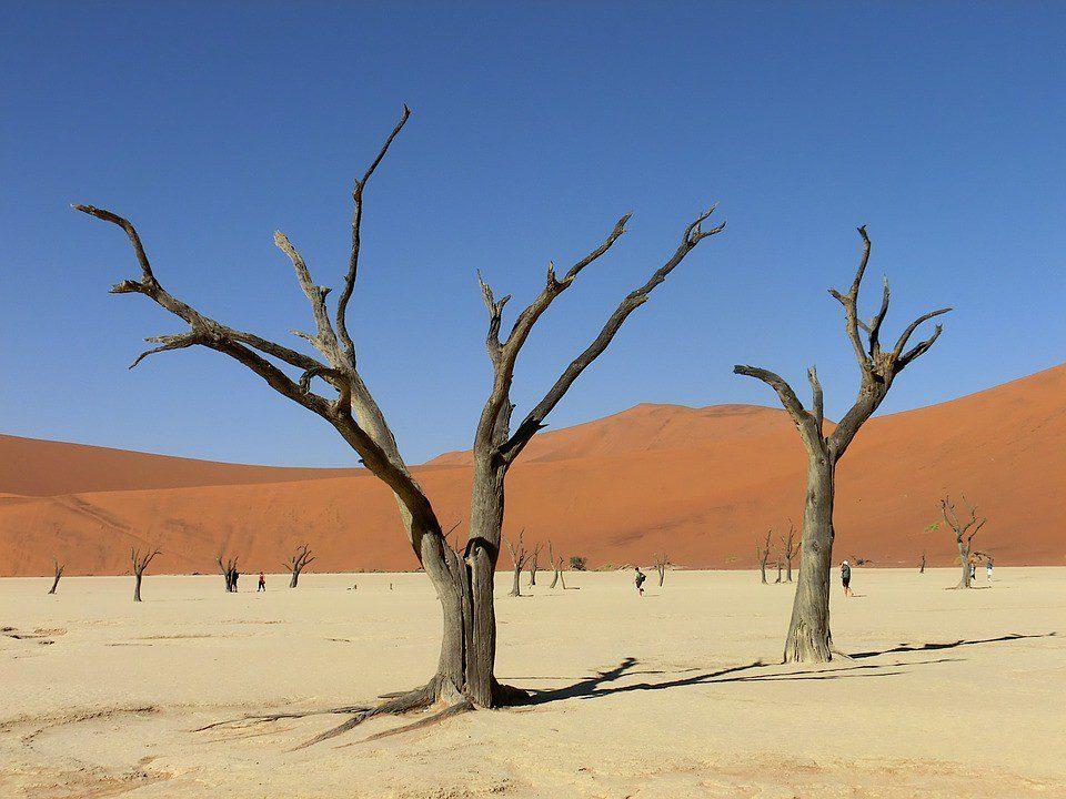 namibia alberi nel deserto
