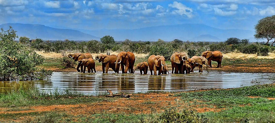 sudafrica kruger park