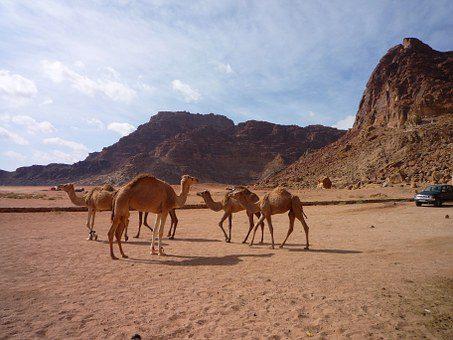 giordania deserto wadi rum  Giordania & Wadi Rum – Tour di Gruppo giordania 22