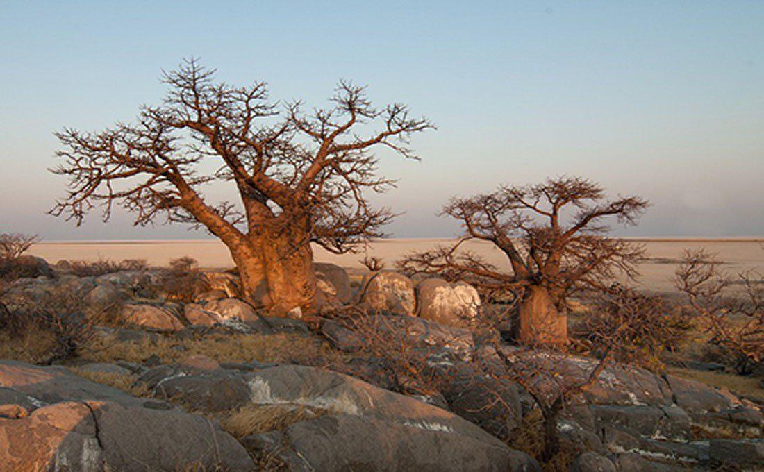 botswana paesaggio