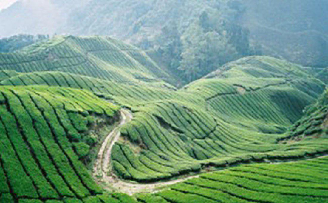 malesia cameron highlands  - HIGHLANDS - Malaysia e Singapore