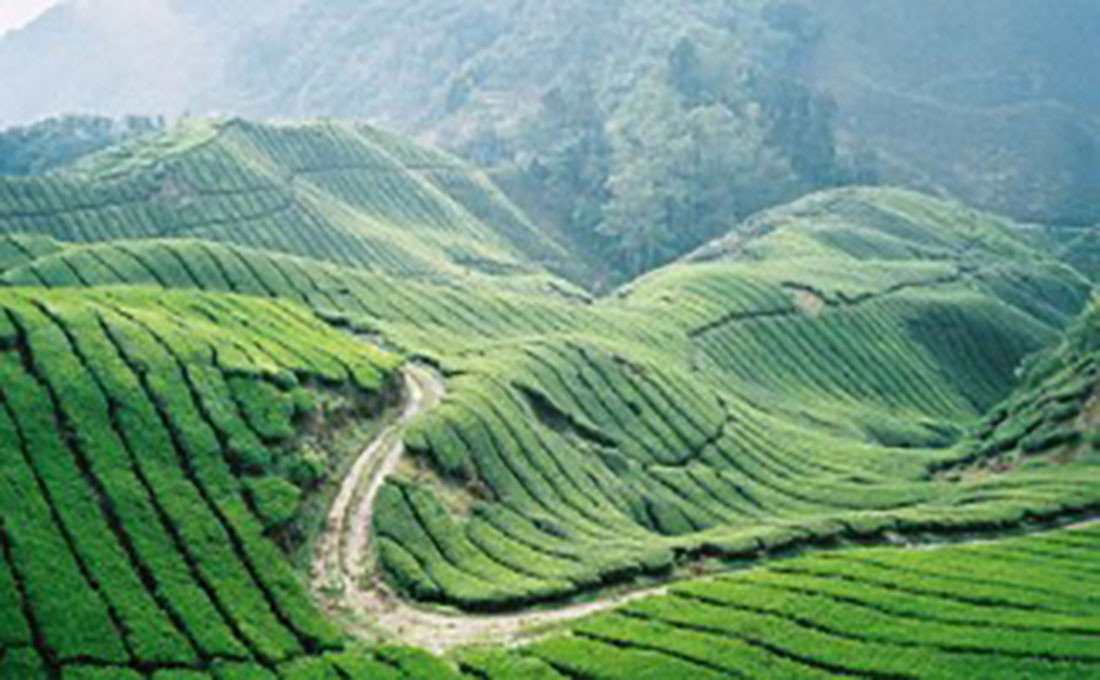 malesia cameron highlands