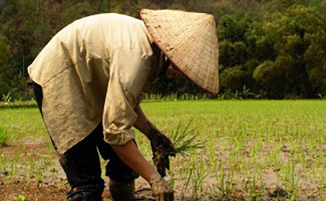 vietnam uomo cappello conico