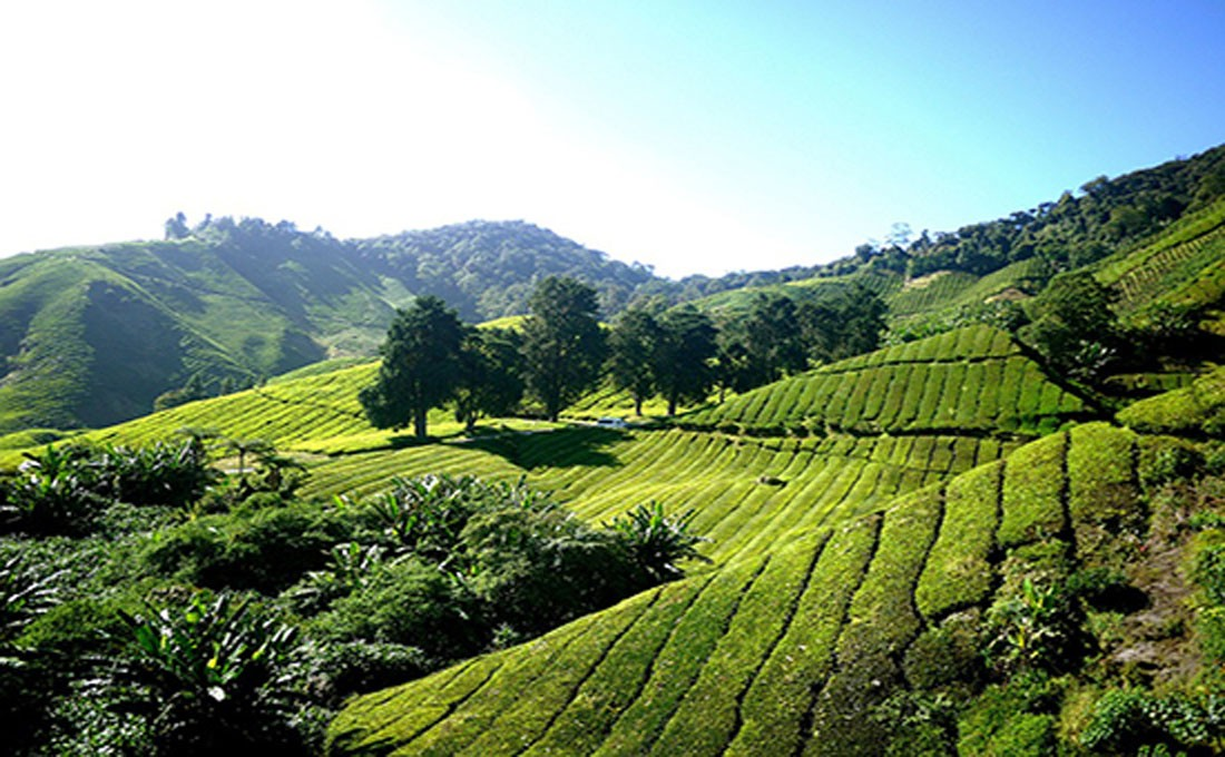 malesia cameron highlands