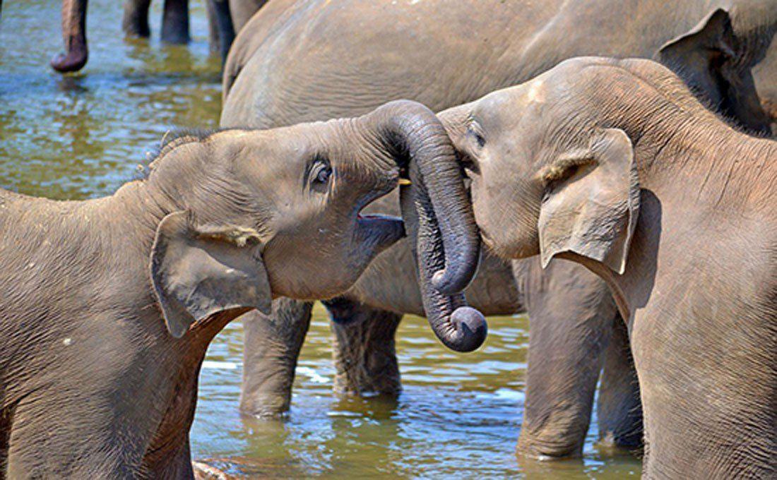 sri lanka polonnaruwa elephant orphanage  - SRI LANKA 3 - Sri Lanka