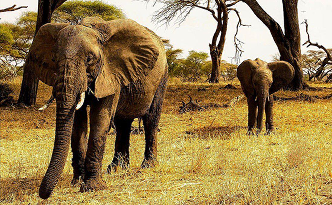 tanzania riserva elefanti  - TANZANIA 3 - Tanzania e Kenya