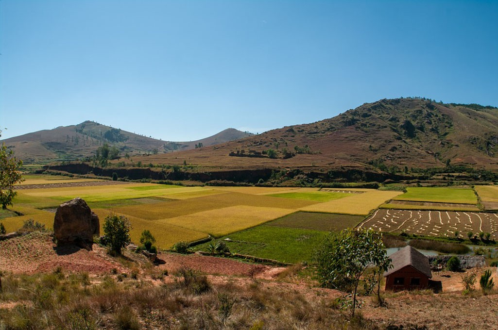 madagascar campo di riso  - madagascar campo di riso - Madagascar