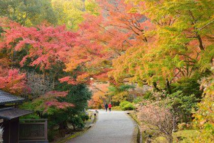 Lo Spettacolo del Foliage  - giappone autunno 420x280 - Il Blog di Origini
