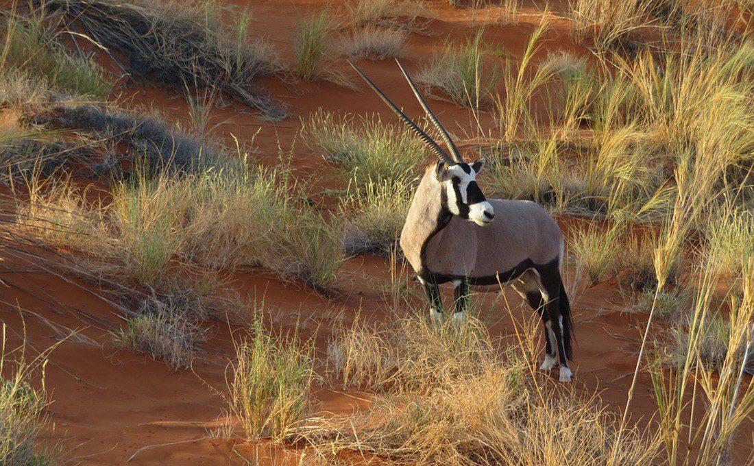 NAMIBIA ONYX