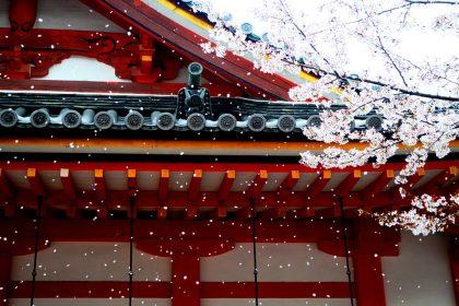 Tour Hanami Giappone  - hanami  420x280 - Il Blog di Origini