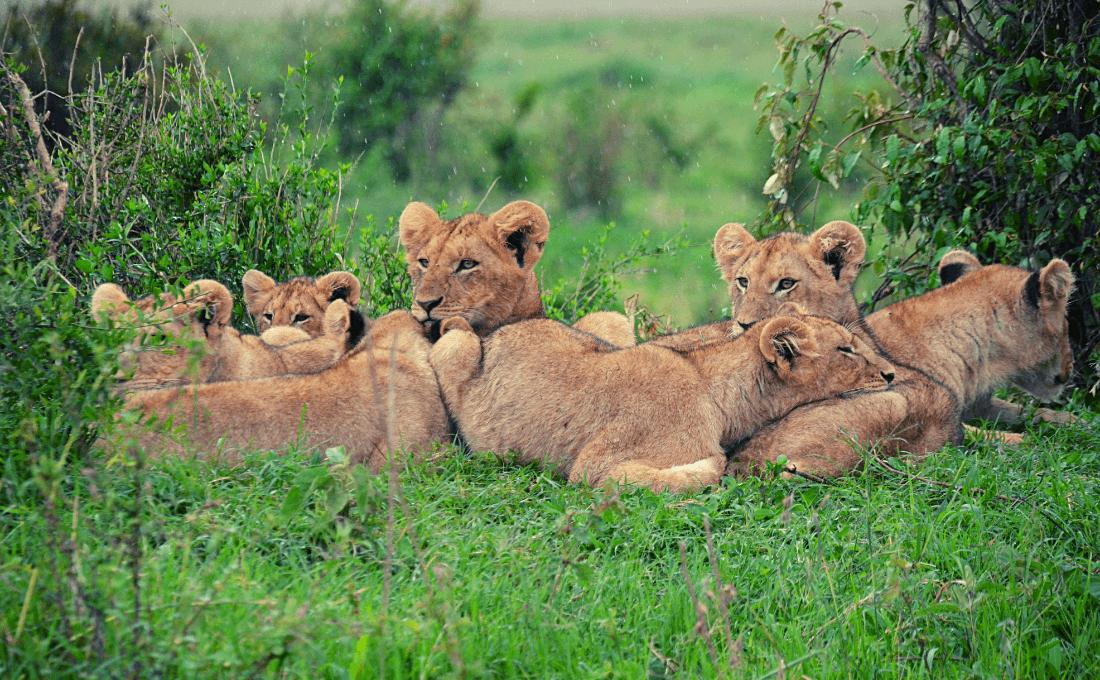 - Foto sito 12 - Tanzania e Kenya