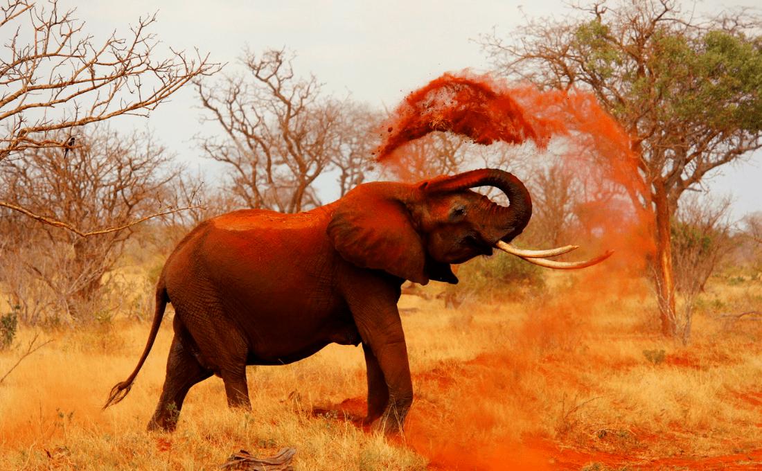 - Foto sito 14 - Tanzania e Kenya