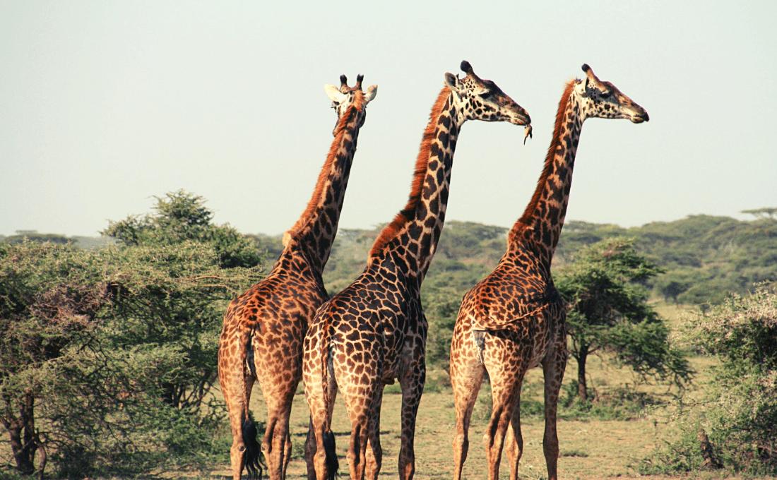 - Namibia tour - Namibia