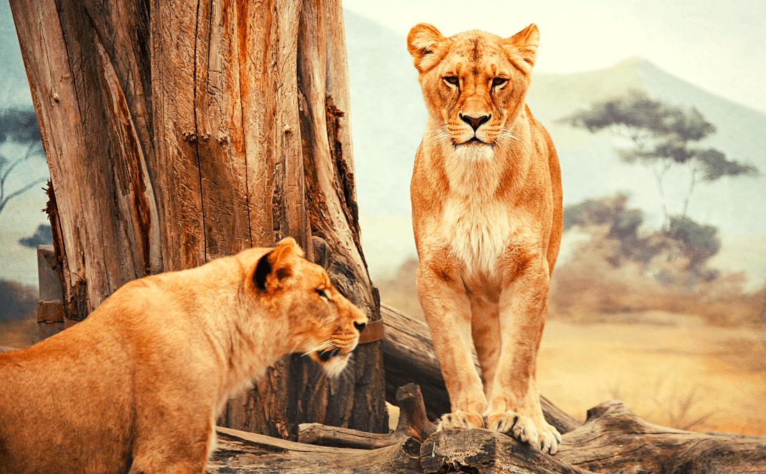 - Namibia wild tour - Namibia