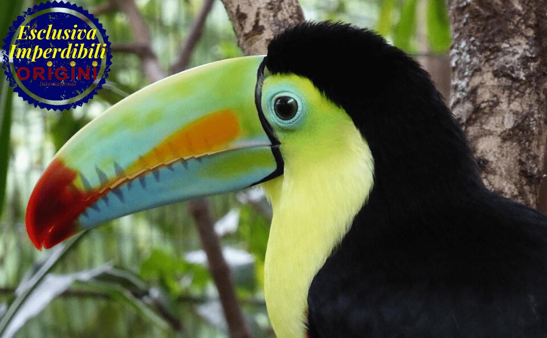 ammirare lo spettacolo della natura - costarica estate origini - Ammirare lo Spettacolo della Natura