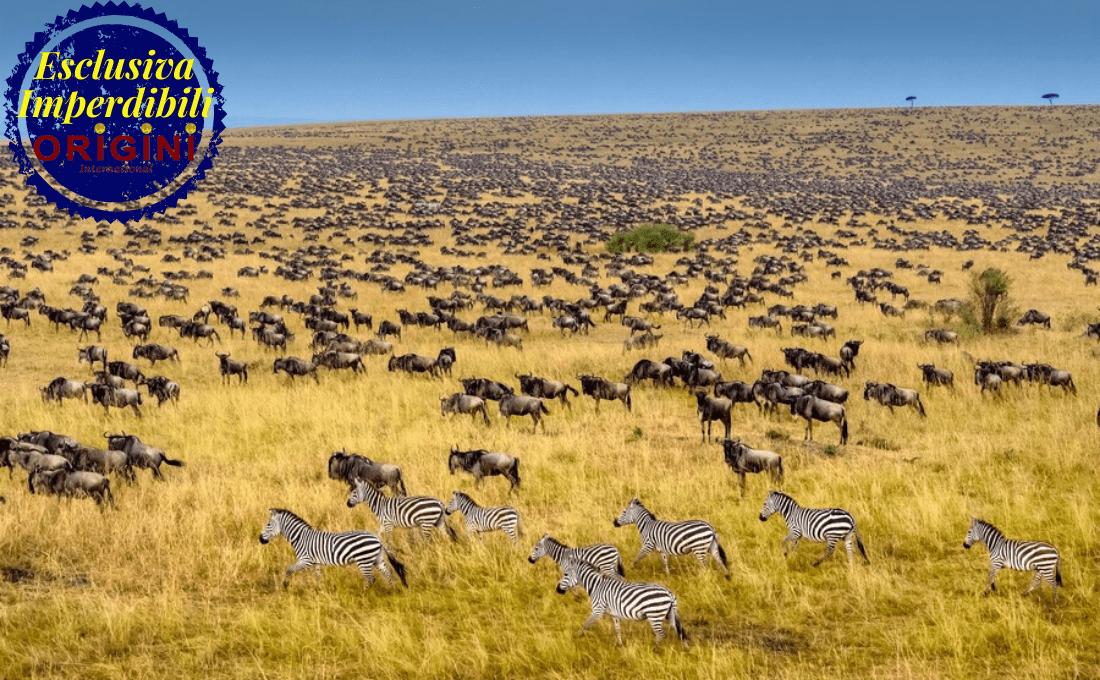 kenya - estate 2020